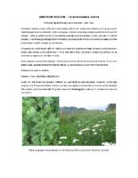 Zdravilne rastline